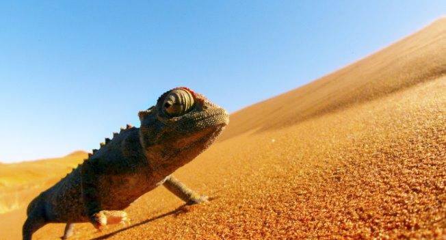 Eine Naturdokumentation über Afrika