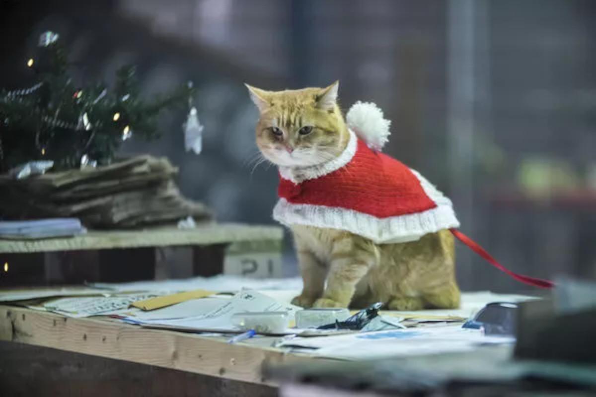 Auf dem Bild ist Bob der Kater in einem weihnachtlichen Mantel zu sehen. Er sitzt auf einem Tisch auf dem viel Papier liegt.